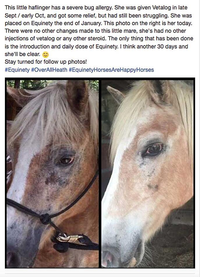 Alergies-Equinety-2-FB